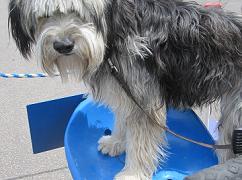 Dog on roller 240